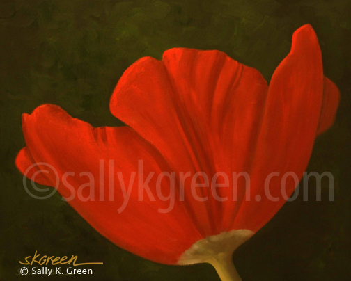 tulip on dark green